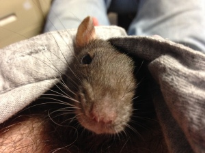 My rattie Pepper. The poem is NOT about her 😉