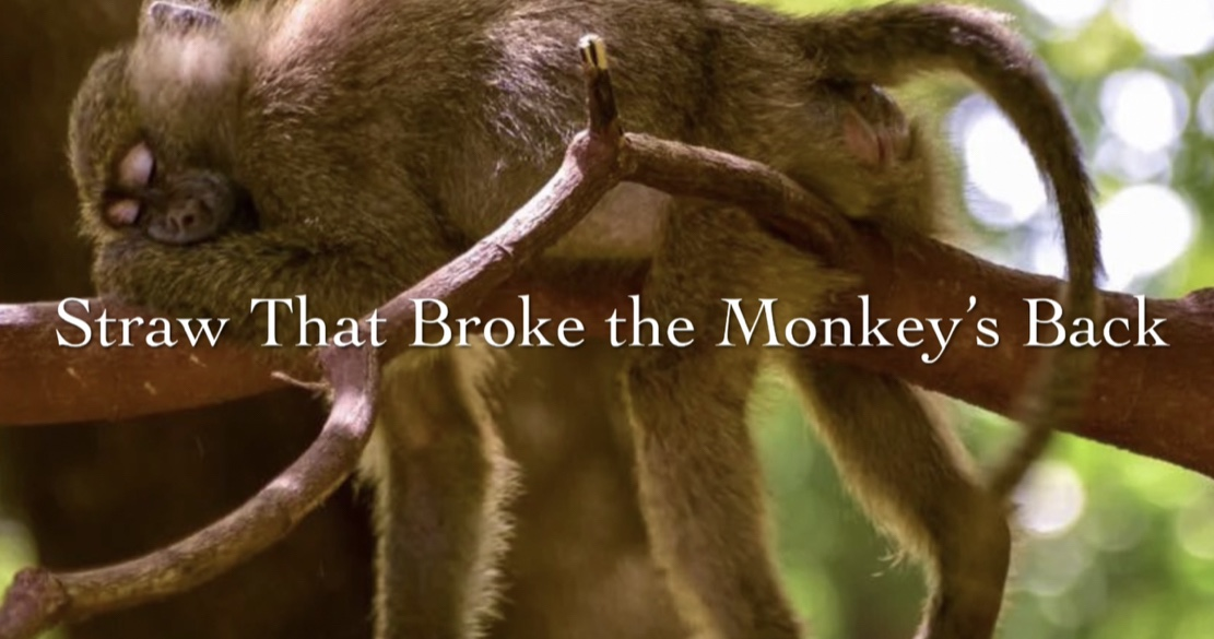 Straw That Broke the Monkey's Back